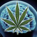Воздействие марихуаны на мозг