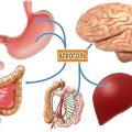 Состояние органов при длительном алкоголизме